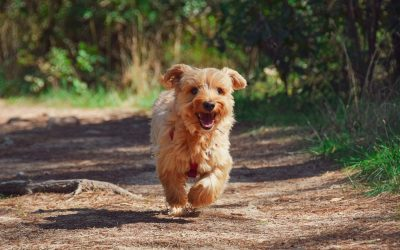 Protect your Pooch with the Neighbourhood Watch